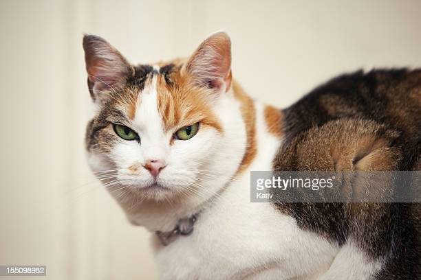 Mean Looking Cat