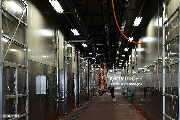 A meat dealer transports his purchased Kobe beef carcasses for shipment after Kobe beef auction operated by Kobe Chuo Chikusan Niuke Ltd at the...