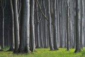 Mecklenburg-Western Pomerania, Beech tree forest