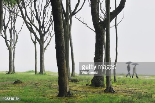 Mecklenburg-Western Pomerania, Two people holding umbrella walking in beech tree forest
