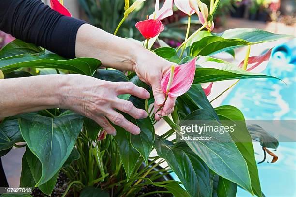 Medizinische arthritische Hände Garten