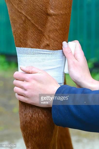 Medizinische bandage für horse