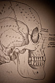 A medical drawing from 'A System of Human Anatomy Including its Medical and Surgical Relations' illustrates the parts of the human skull 1883
