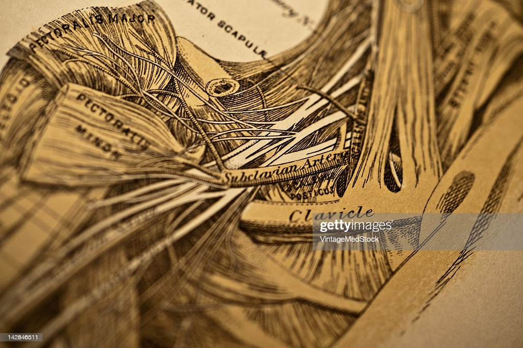A medical engraving from 'A System of Human Anatomy Including its Medical and Surgical Relations' illustrates autopsy of the human shoulder 1883...