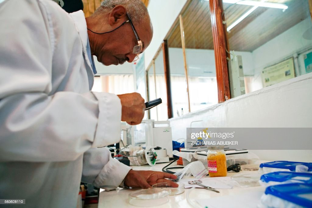 Medical entomologist and vector biologist at the department of Zoological Sciences of Addis Ababa University Dr Habte Tekie examines a specimen at...