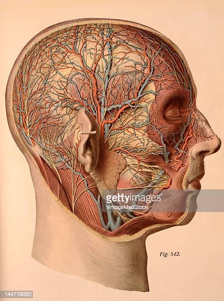 Atlas facial nerve surgery