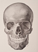 A medical illustration from 'HandAtlas of Human Anatomy volume 1' shows the skull from the front 1923