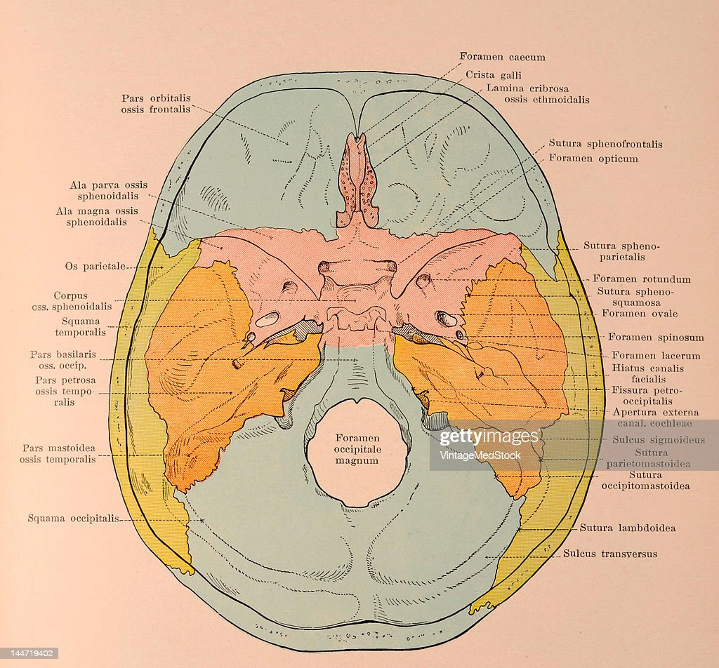 A medical illustration from 'HandAtlas of Human Anatomy volume 1' shows the base of the skull from the inside basis cranii externa with names of...