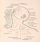 A medical illustration from 'HandAtlas of Human Anatomy volume 2' shows the regions of the head and neck 1923