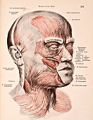 A medical illustration from 'HandAtlas of Human Anatomy volume 2' shows the muscles of the head and face viewed somewhat from the right 1923