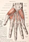 A medical illustration from 'HandAtlas of Human Anatomy volume 2' shows the muscles of the right palm 1923