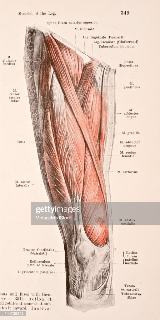A medical illustration from 'HandAtlas of Human Anatomy volume 2' shows the right thigh view from in front 1923