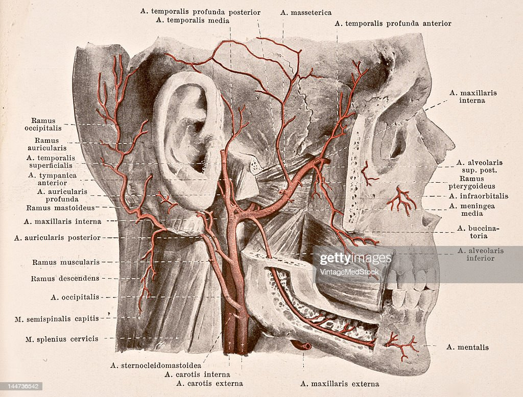 A medical illustration from 'HandAtlas of Human Anatomy volume 2' shows the deep arteries from of the face viewed from the right 1923