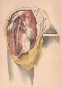 A medical illustration from 'Illustrations of Dissections' shows an autopsy of the human knee 1882 Knee joint muscles major nerves and arteries are...
