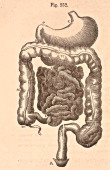 A medical illustration from 'Quain's Elements of Anatomy Eighth Edition VolII' depicts the abdominal part of the alimentary canal 1876