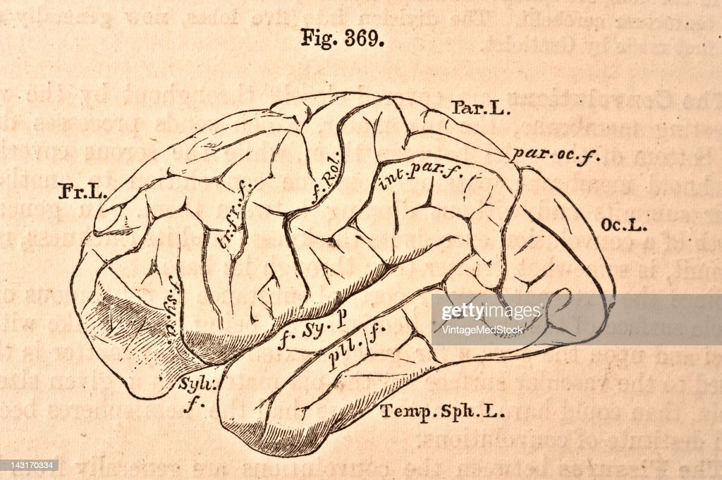 A medical illustration from 'Quain's Elements of Anatomy Eighth Edition VolII' depicts the figure of the brain of chimpanzee 1876