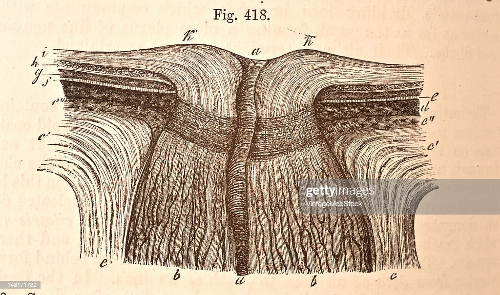 A medical illustration from 'Quain's Elements of Anatomy Eighth Edition VolII' depicts the section through the middle of the optic nerve and the...