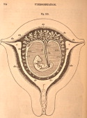 A medical illustration from 'Quain's Elements of Anatomy Eighth Edition VolII' depicts the diagrammatic view of the transverse section of the uterus...