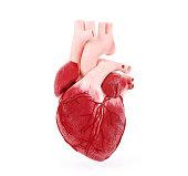 Medical illustration of a human heart, 3D rendering