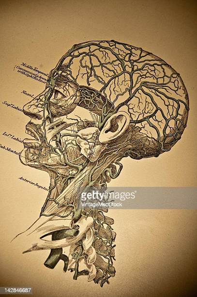 A medical lithograph from 'A System of Human Anatomy Including its Medical and Surgical Relations' illustrates the cardiovascular system of the human...