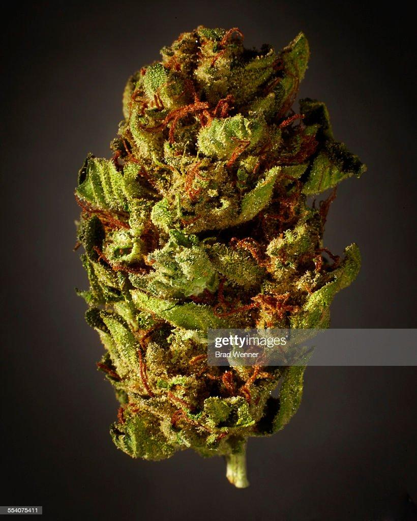 Medical Marijuana on Gray