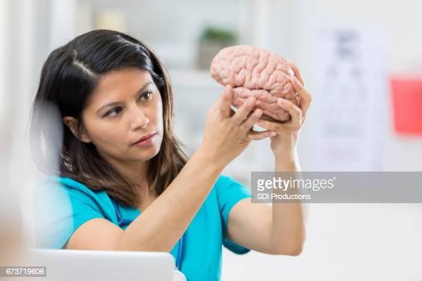 Medical professional examines human brain model