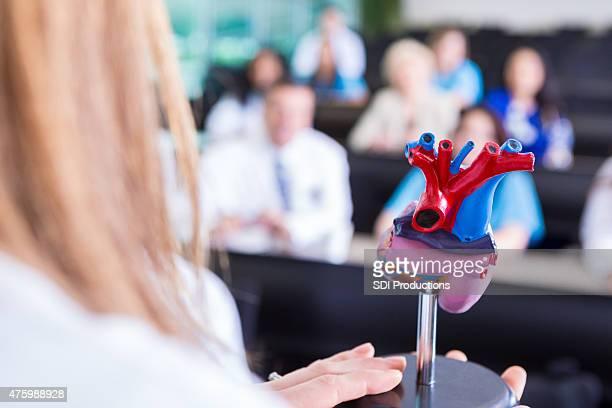 Medical professor using human heart model to teach college class