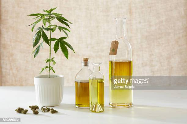 Medicinal and healing properties of cannabis