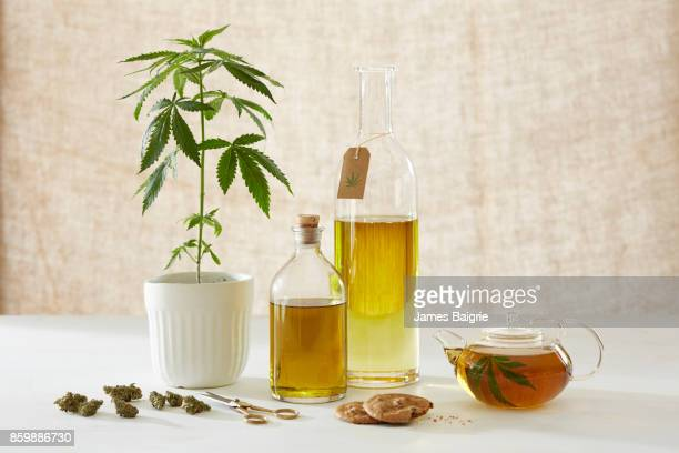 Medicinal and healing properties of cannabis