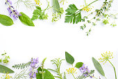 frame of medicinal herbal leaves and flowers on white background