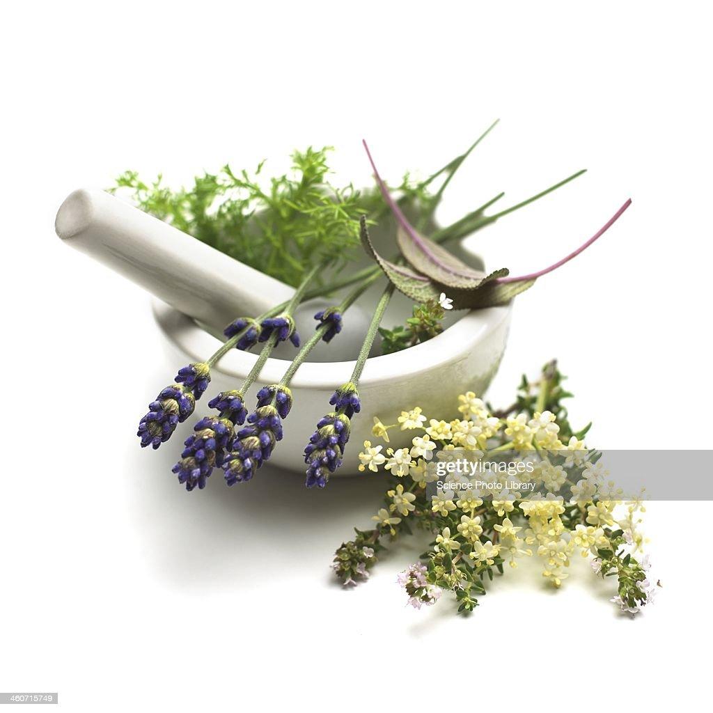 Medicinal plants, conceptual image