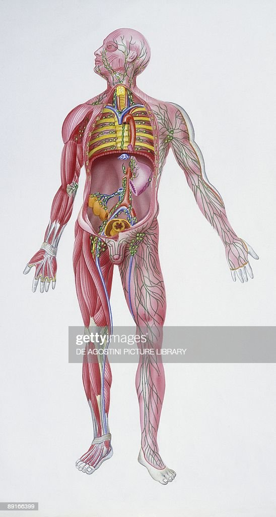 Medicine Lymphatic system illustration