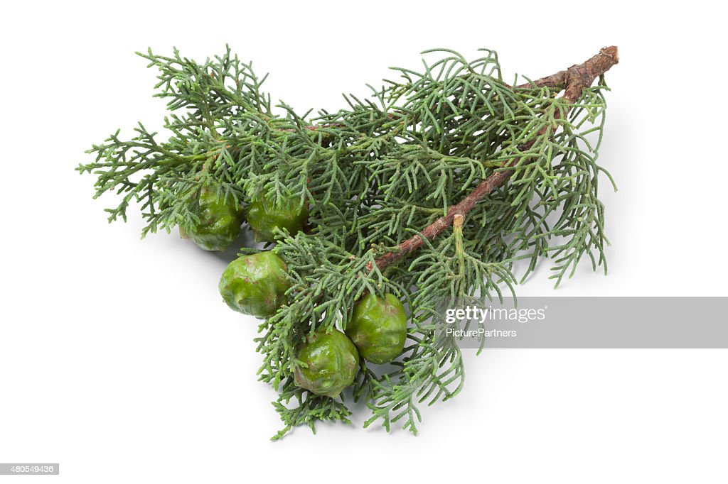 Conos de ciprés Mediterráneo y follaje : Foto de stock