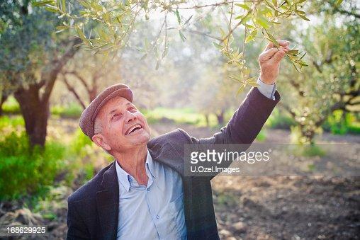 A mediterranean senior agriculturist holding a tree branch
