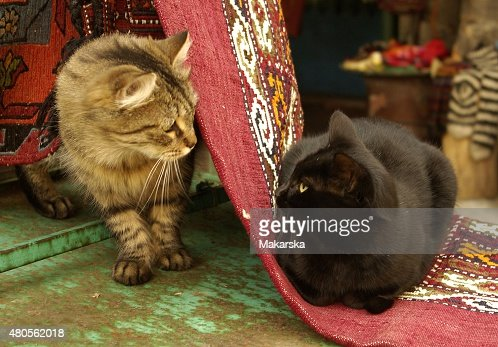Meeting Cats : Stock Photo