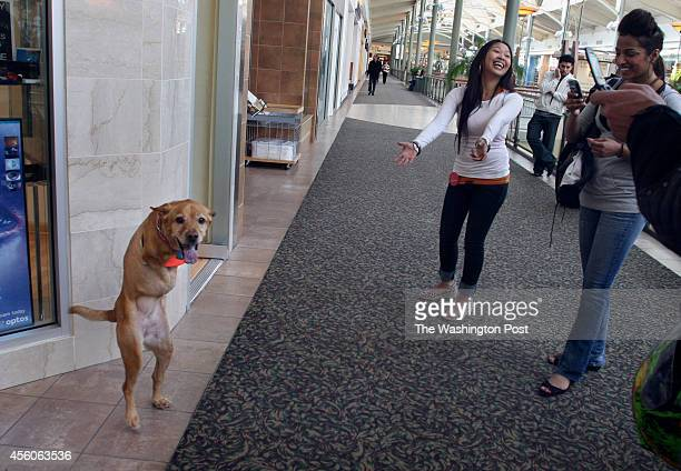 March 28 2008 CREDIT Carol Guzy/The Washington Post via Getty Images LOCATION Chantilly VA CAPTION Faith the dog makes appearances as local malls to...
