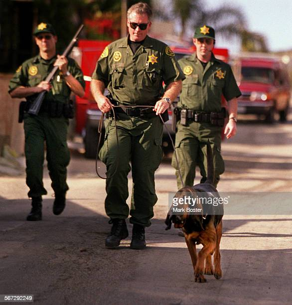 MEFugitiveHound032299MB–––Orange County Sheriff deputies armed with shotguns guided 'Max' the bloodhound as they searched for fugitive murder suspect...