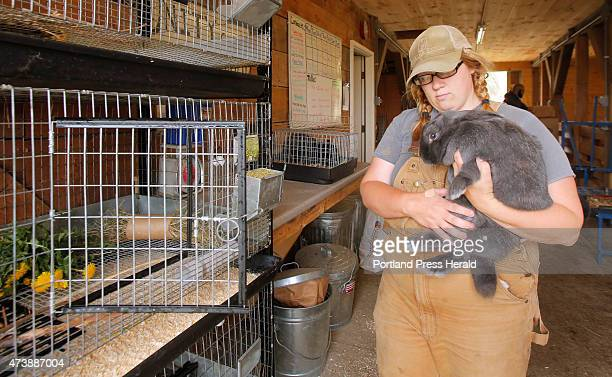 Megan Anderson farm manager at Unity College puts Josi a silver fox rabbit back into its cage after cleaning the cage in the livestock barn at the...