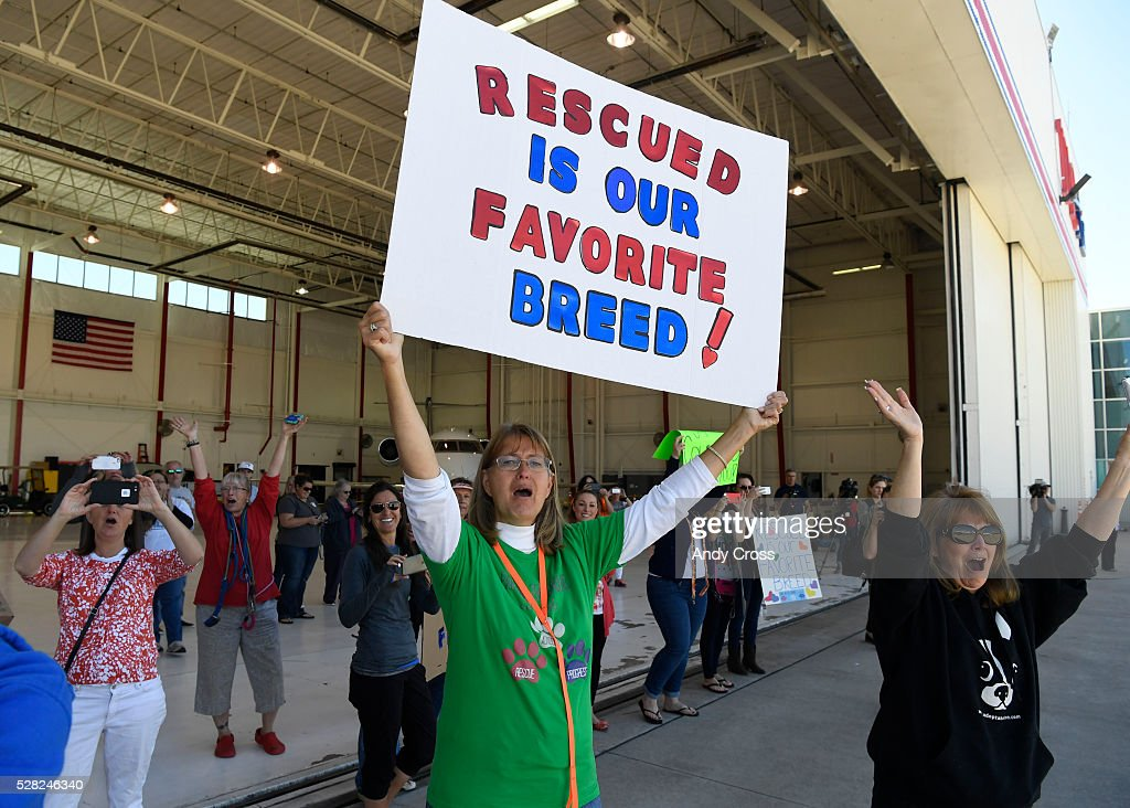 Melanie Fisher, center holding sign, with Dogs on the Ground, along with several others, cheer the arrival of the Dog is My Copilot airplane at the TAC Air hanger May 04, 2016. Dog is My Copilot, a non-profit organization, flew in over 90 rescue dogs and rescue cats from Texas and New Mexico to awaiting foster organizations at Centennial Airport May 04, 2016.