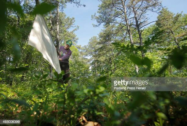 Melanie Renell checks her flag a square piece of corduroy attached to a broom stick for ticks in the woods at the Kennebunk Plains in Kennebunk on...