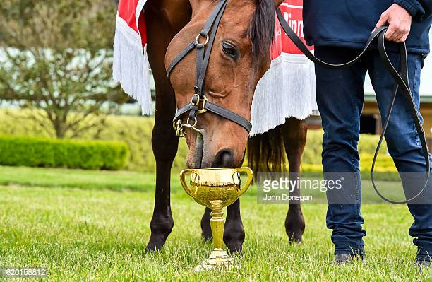 Melbourne Cup poses for photographers with the trophy at Macedon on November 02 2016 in Macedon Australia