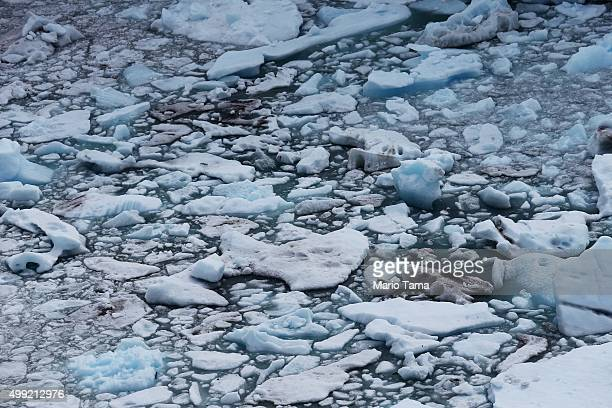 Melting glacial ice floats in Los Glaciares National Park part of the Southern Patagonian Ice Field on November 29 2015 in Santa Cruz Province...
