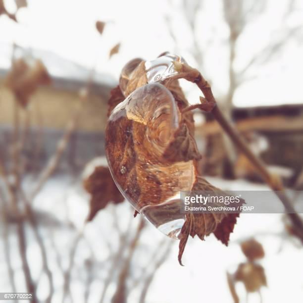 Melting of ice on twig