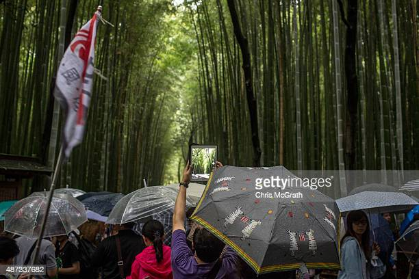 A member of a Chinese tour group tries to take a photograph with his ipad at the famous Sagano Bamboo Forest on September 6 2015 in Kyoto Japan The...