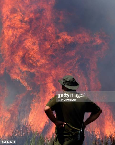 A member of a firefighting brigade looks at the flames of a wildfire burning in Vilardevos close to Verin northwestern Spain on August 4 2017 / AFP...