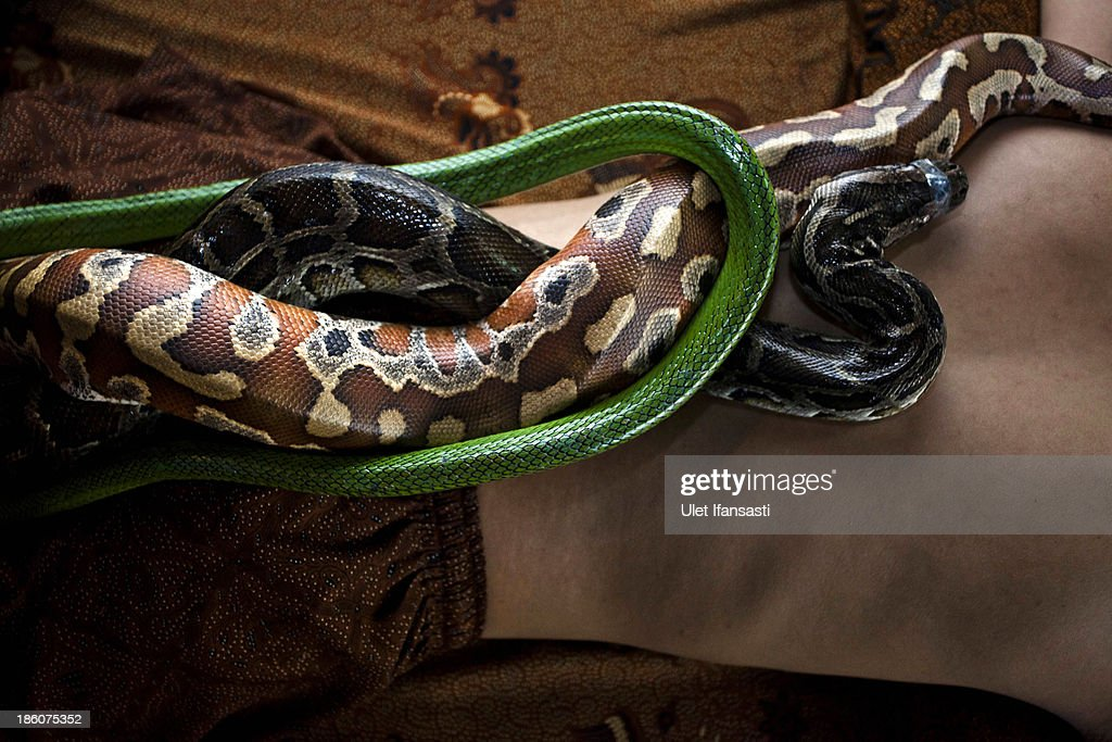 A member of staff demonstrates a massage using pythons at Bali Heritage Reflexology and Spa on October 27, 2013 in Jakarta, Indonesia. The snake spa offers a unique massage treatment which involves having several pythons placed on the customers body. The movement of the snakes and the adrenaline triggered by fear is said to have a positive impact on the customers metabolism.