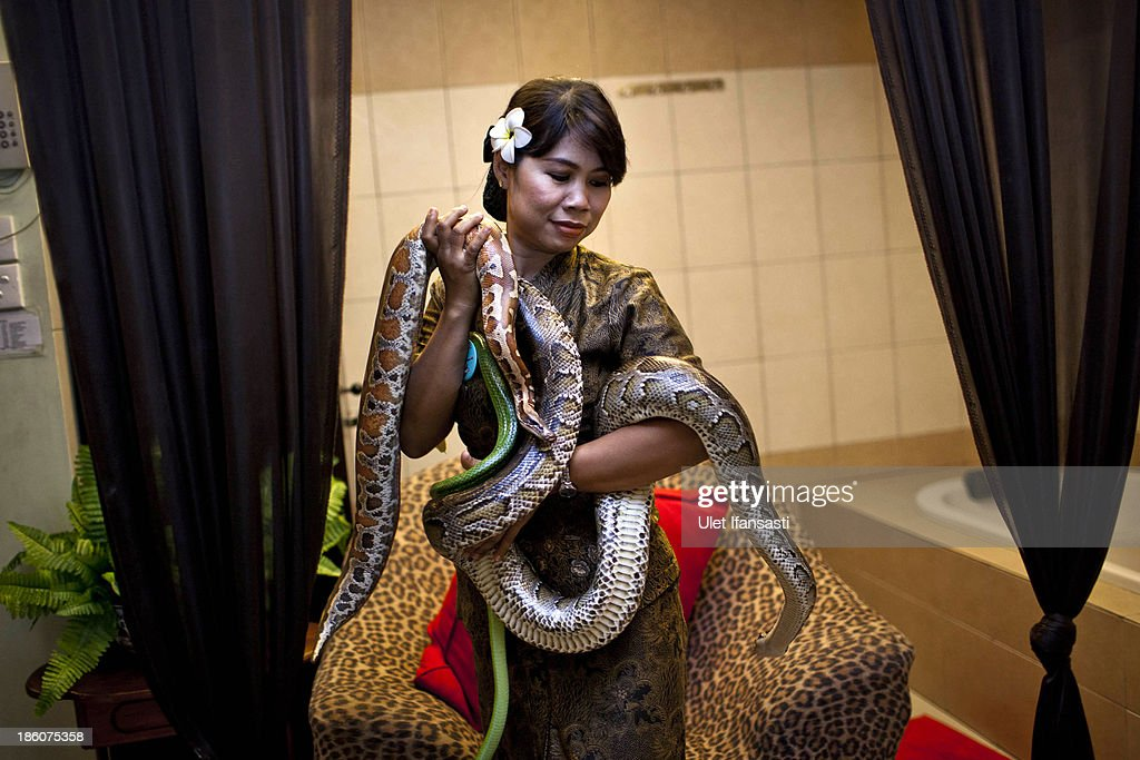 A member of staff holds pythons used in massage treatments at Bali Heritage Reflexology and Spa on October 27, 2013 in Jakarta, Indonesia. The snake spa offers a unique massage treatment which involves having several pythons placed on the customers body. The movement of the snakes and the adrenaline triggered by fear is said to have a positive impact on the customers metabolism.