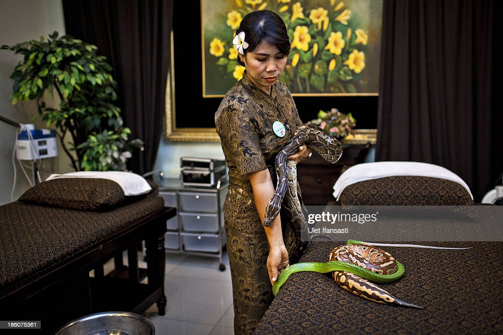 A member of staff prepares pythons used in massage treatments at Bali Heritage Reflexology and Spa on October 27, 2013 in Jakarta, Indonesia. The snake spa offers a unique massage treatment which involves having several pythons placed on the customers body. The movement of the snakes and the adrenaline triggered by fear is said to have a positive impact on the customers metabolism.