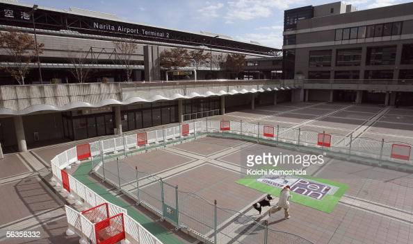 A member of staff takes a dog for a walk at a large pet hotel located at Narita International Airport on December 7 2005 in Narita Japan The Pet Inn...
