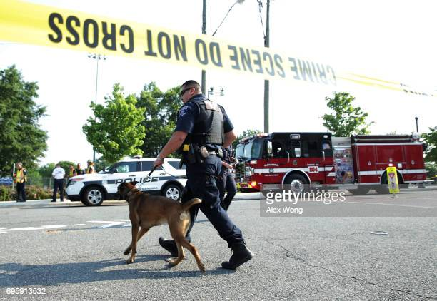 A member of the Alexandria Police and his canine patrol near the site of a morning shooting at Eugene Simpson Stadium Park June 14 2017 in Alexandria...